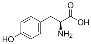 structural of l tyrosine amino acid